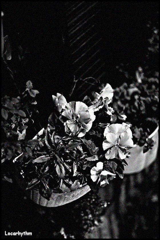 モノクロ花.jpg